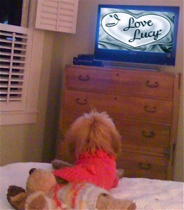 Entry3Lucy watching her favorite show